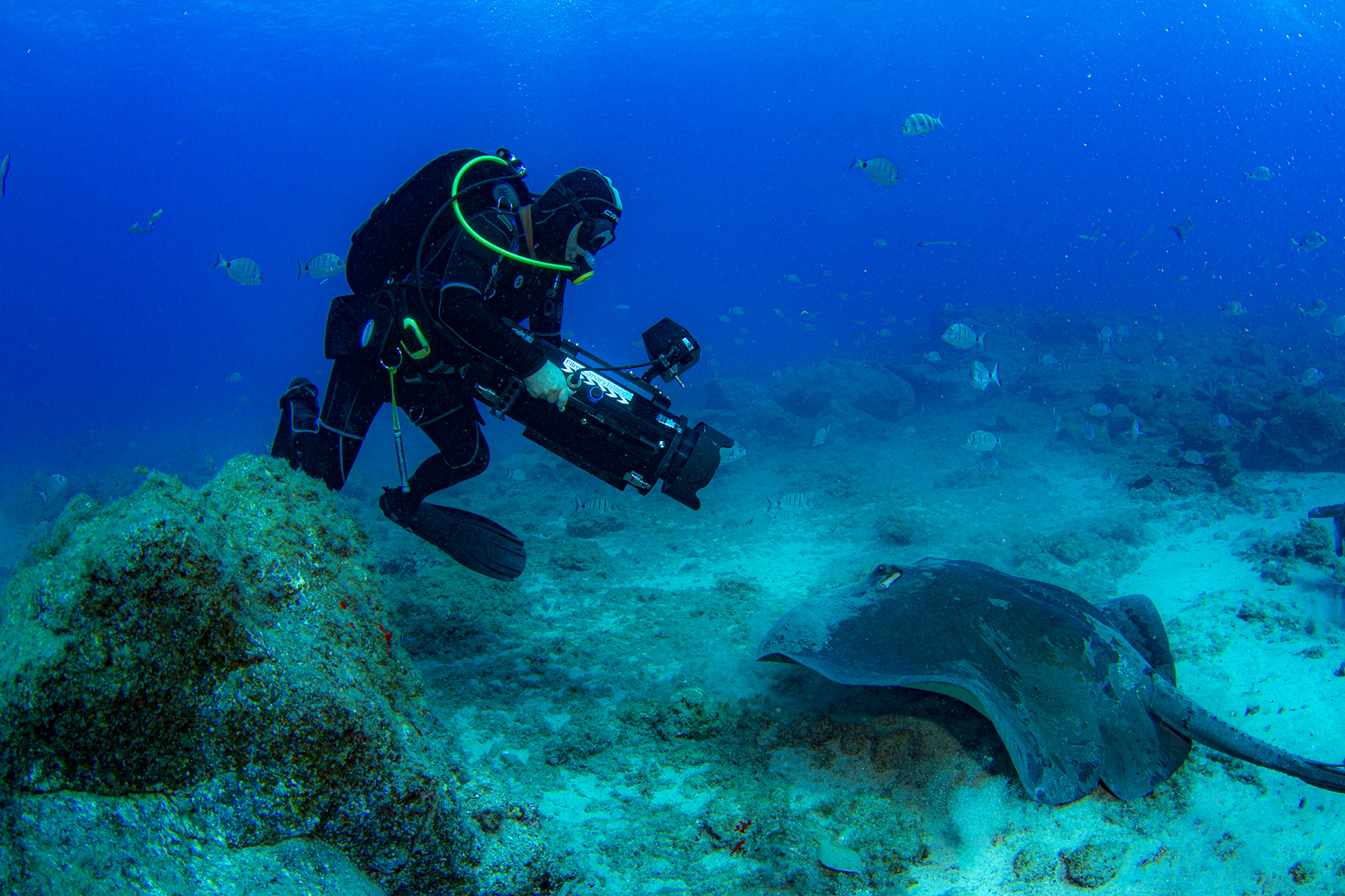Underwater Director of Photography